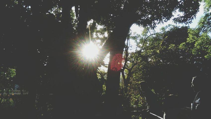 Medellin City Colombia ♥  Nature Leaves Light Trees Pueblito Paisa Cerro
