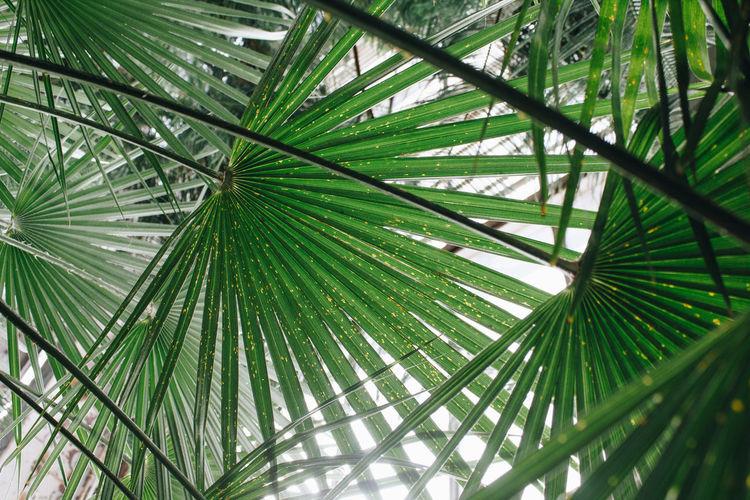 Riga Latvia Greenery Botanical Gardens Botanical Garden Tree Palm Tree Leaf Frond Full Frame Backgrounds Sky Close-up Green Color Palm Leaf
