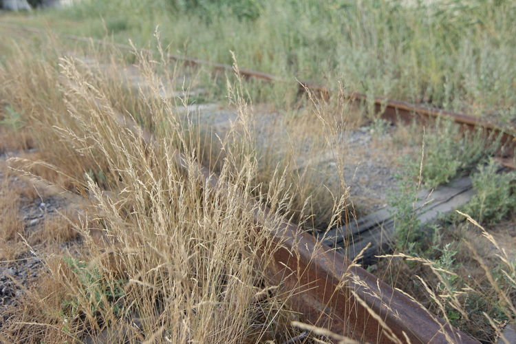 Old rails. Grass Land Plant Nature Field Day No People Tranquility Growth Focus On Foreground Outdoors Landscape Close-up Selective Focus Environment Abandoned Non-urban Scene Tranquil Scene Beauty In Nature Green Color Timothy Grass Old Rails Rails Summer Evening