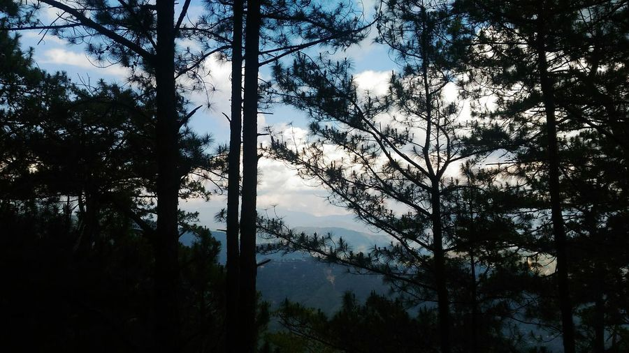 Tree Sky Nature Silhouette Scenics Beauty In Nature Growth Tranquility No People Sunset Cloud - Sky Outdoors Tranquil Scene Day Treetop Adventure Baguiocity2017 Baguiocity