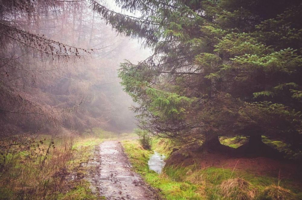 Walking in the fog. Landscape Landscape_Collection Landscape_photography Nature Naturelover Nature_collection Outdoors Photography Tree Fog Foggy Walking Yorkshire Taking Photos Walking Around Hiking