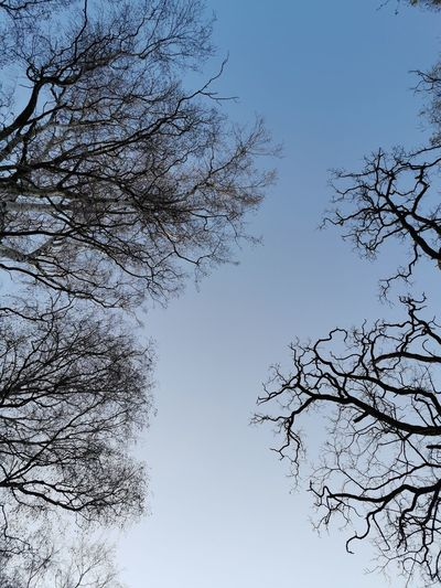 Pixelated Tree Water Flying Bird Flock Of Birds Branch Sky Close-up Migrating