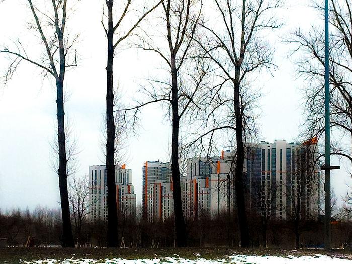 Urban trees 2 Apartment Buildings Street Winter Trees Saint Petersburg