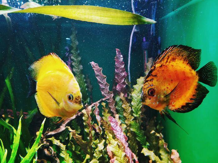 St. Petersburg, Russia Animal Themes Travel Destinations Eye4photography  Oceanarium Oceananimals Underwater World Water Fishes