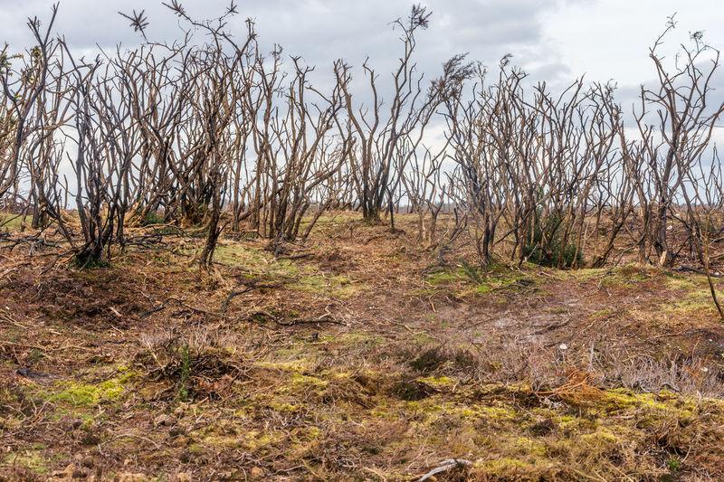 Bare Tree Bracken Desolation Landscape Nature New Forest New Forest Pony Winter