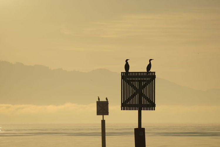 Cormorant perching on wooden post by sea against sky during sunset