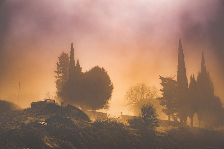 By Anna Wacker Tree Plant Sky Sunset Nature Fog No People Beauty In Nature Scenics - Nature Tranquility Growth Tranquil Scene Built Structure Environment Silhouette Cloud - Sky Non-urban Scene Outdoors Misty Sunrise Cypress Trees  Farming Equipment Rural Scene Winter Morning Moody Weather Eerie Beautiful