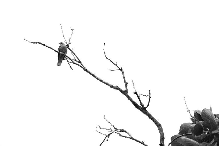 Black And White Black And White Photography Black And White Bird Bird And Tree Bird Bird Photography Bird On A Tree Bird On The Tree Animal Animal Themes Nature One Animal