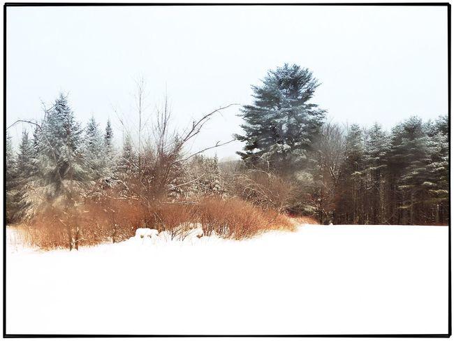 Winter gold Winter Landscape Maine