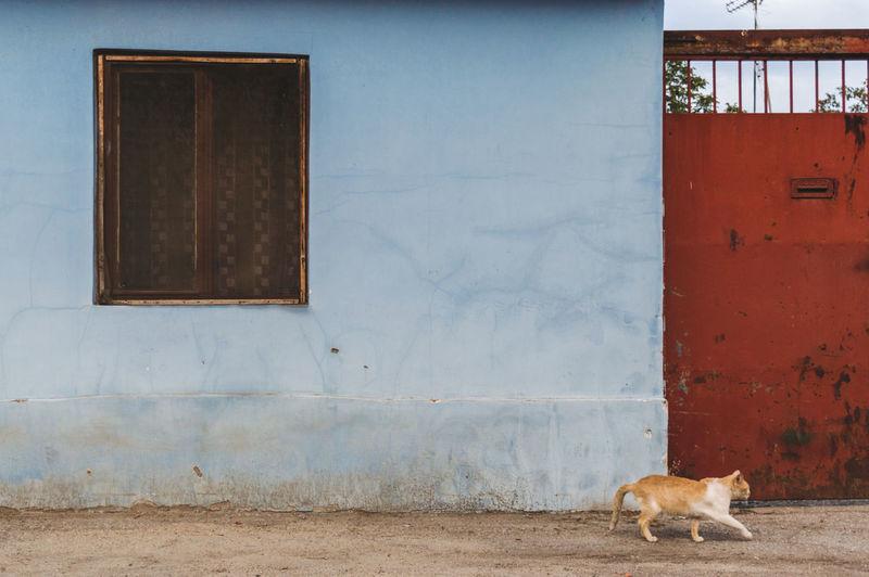 Cat walking on street