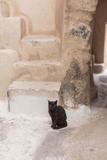 Portrait of a cat sitting on staircase