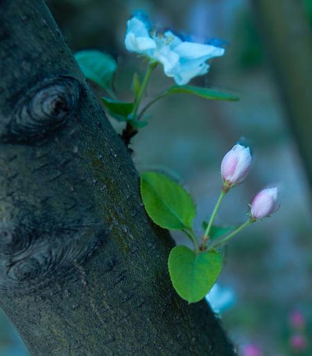 Flowers will
