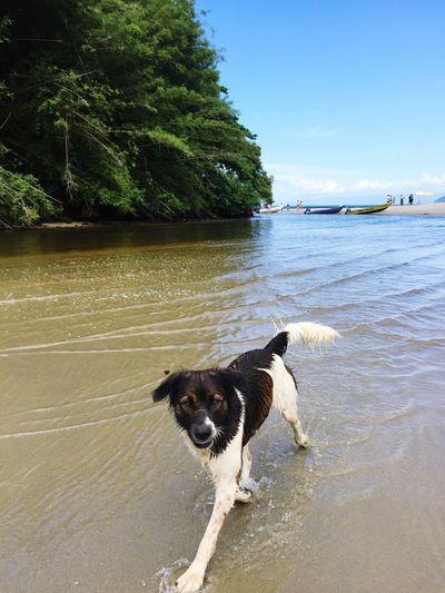 Dog in a lake