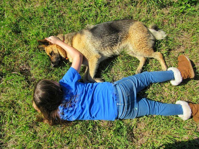 friendship Dog