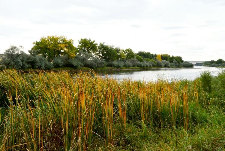 Reeds and trees Cloudy Day Day No People Outdoors Ripple Of The Water River Water Water Level Shown On Concrete