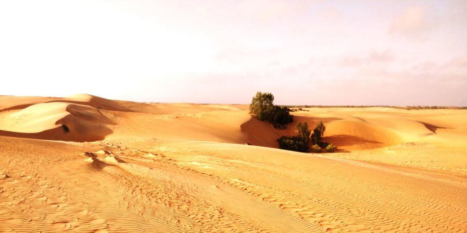 Senegal Lompoul Africa Afrique Love Africa Réflexion EyeEm Selects Sand Dune Desert Arid Climate Sand Tree Extreme Terrain Sky Landscape