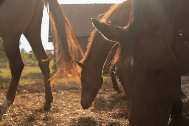Horses in