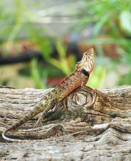 Close-up of lizard on tree