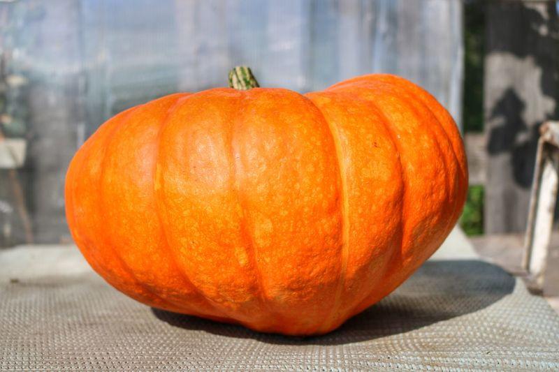 Pumpkin Halloween Orange Color Autumn No People Vegetable Food And Drink Squash - Vegetable Jack O' Lantern Day Freshness Food Close-up Gourd Indoors