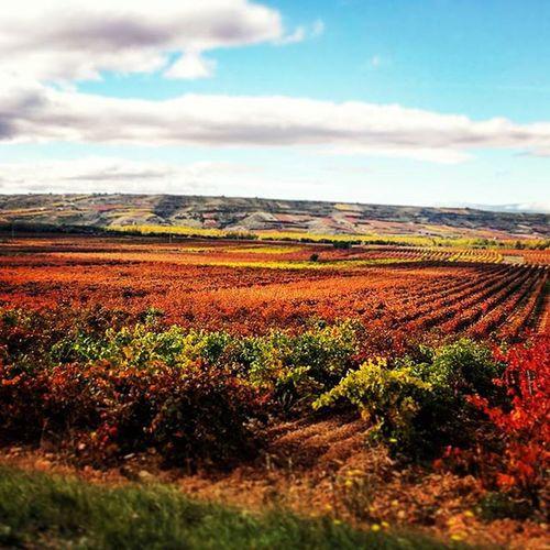 Tardor Autumn Otoño Color Vinãs Larioja simplemente Beautiful Nice 😆😆😉🍁🍁🌲🌳🌰🌰🌰🌰 colores que alegran el día y te sacan una sonrisa. InstAutumn