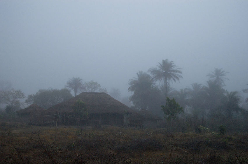 On the road from Quebo via Ché Ché to Gabu in Guinea-Bissau. Guinea Guinea-Bissau Republic Of Guinea-Bissau República Da Guiné-Bissau West Africa Africa African Village Architecture Early Morning Fog Foggy Foggy Morning Landscape Mist Outdoors Scenics Tranquility