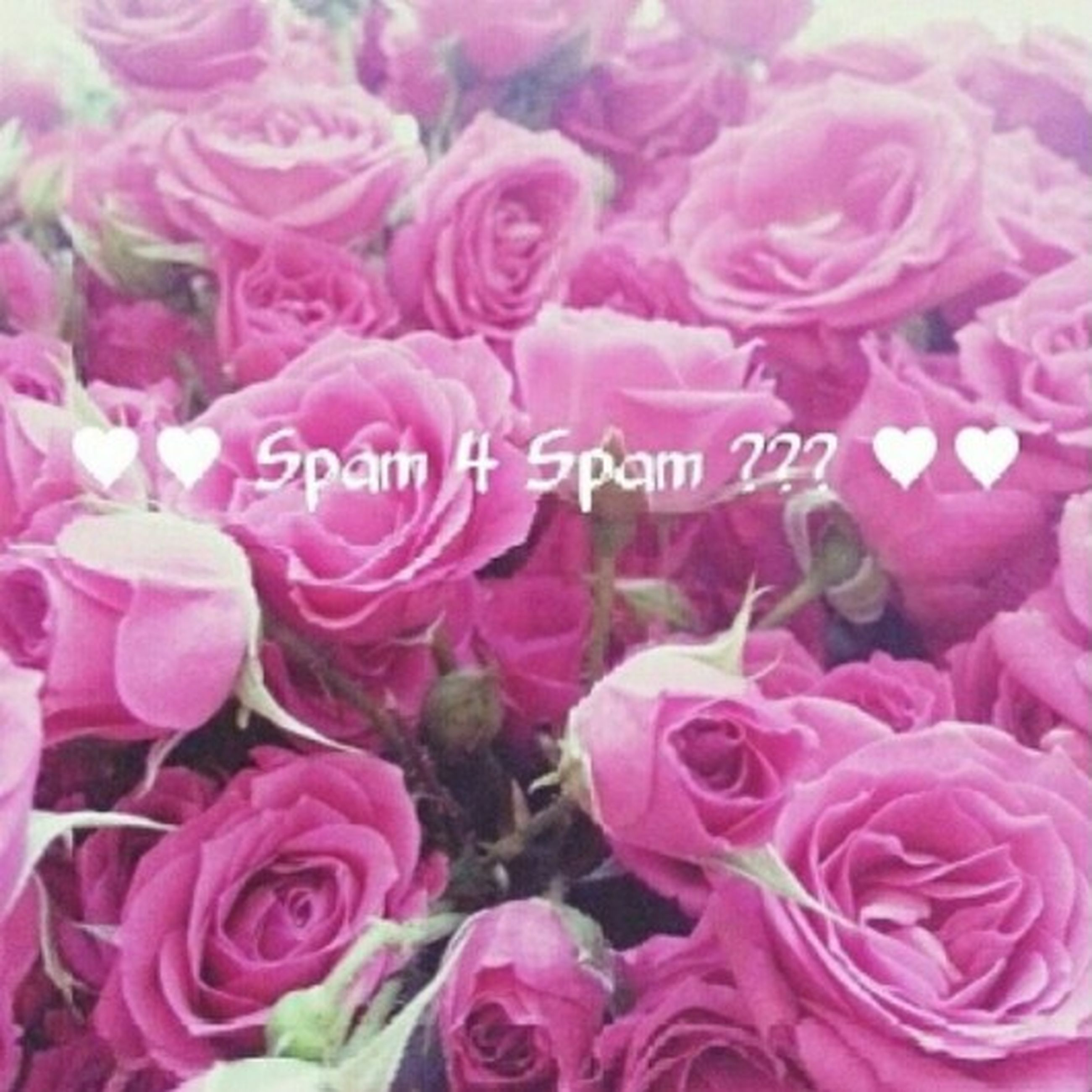 flower, petal, freshness, pink color, fragility, flower head, beauty in nature, full frame, backgrounds, rose - flower, growth, nature, close-up, blooming, pink, plant, abundance, high angle view, no people, in bloom