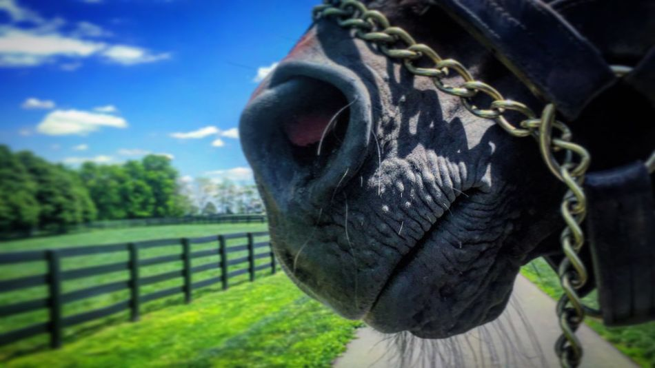 One Animal Focus On Foreground Animal Head  No People Horse Livestock Close-up Day Outdoors Sky Zoology Long Tranquility