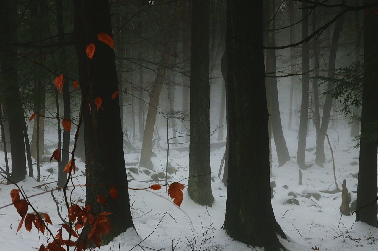 tree, snow, winter, trunk, cold temperature, tree trunk, plant, land, forest, nature, no people, branch, tranquility, beauty in nature, covering, outdoors, field, fog, day, leaves