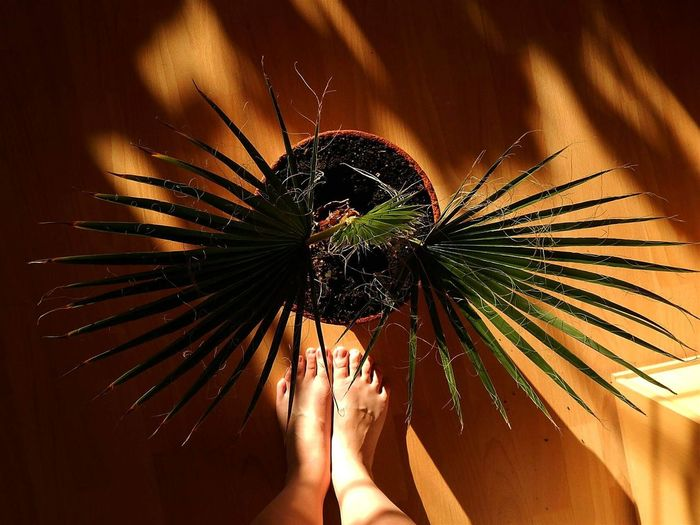 My Palmtree ILoveThis Beautiful Hello World Eyeemhungary Hungary