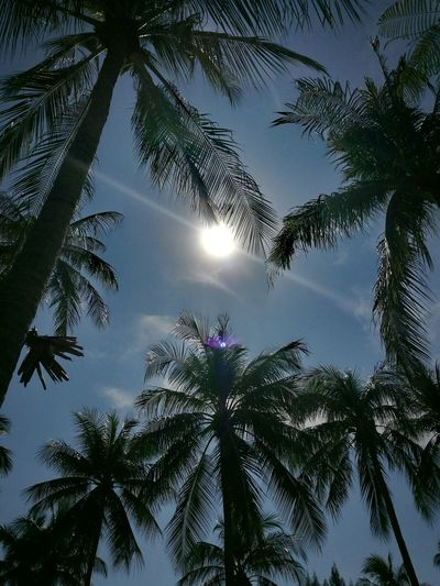 Coconut grove 🏝