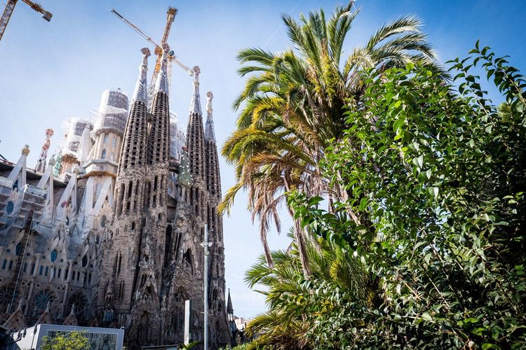 Sagrada Familia SPAIN Barcelona, Spain Barcelona Sagrada Familia Tree Plant Sky Low Angle View Growth Nature Architecture Built Structure Travel Destinations Outdoors Palm Tree