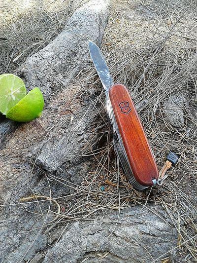 Outdor Swisschamp Victorinoxswissarmy Victorinox Lemon Knife