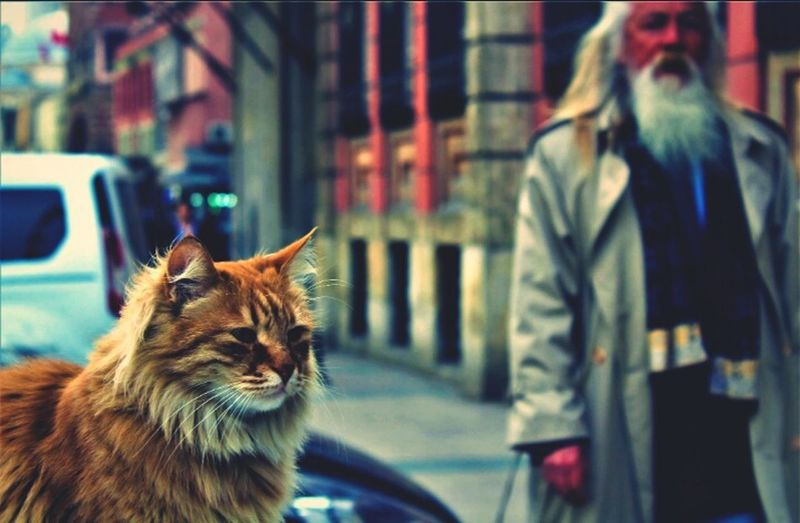 Istanbul Cats Old First Eyeem Photo Firsteyeemphoto MyPhotography FirstEyeEmPic First Eyem Photo Firts Eyeem Photo Istanbul Turkey Mtngrlr The Street Photographer - 2017 EyeEm Awards