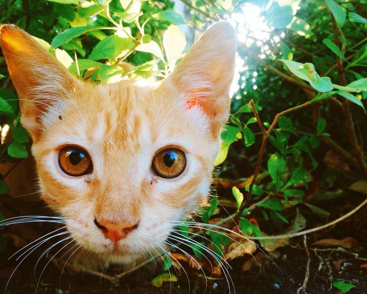 Cat Kittie