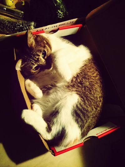 Cute Pets Cat Lovers Cat♡ Cute♡