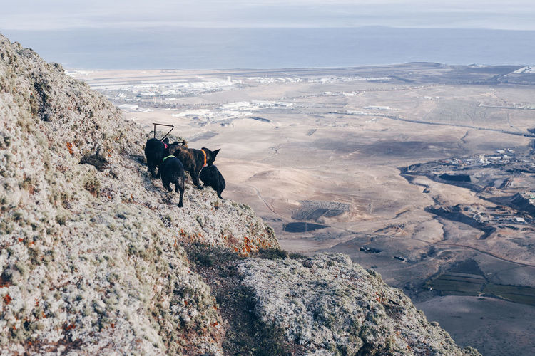 View of dogs on rock