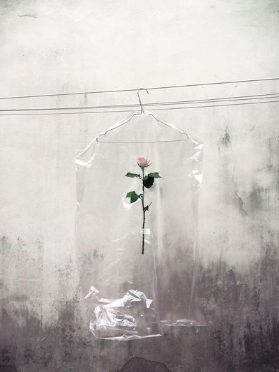 Dry cleaning bag with rose hanging against wall