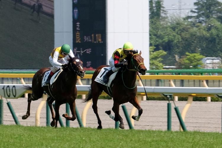 Fujifilm Fujifilm_xseries Horse Racing Tokyo Horse Racing Tokyo Racecourse Uplifting X-PRO2