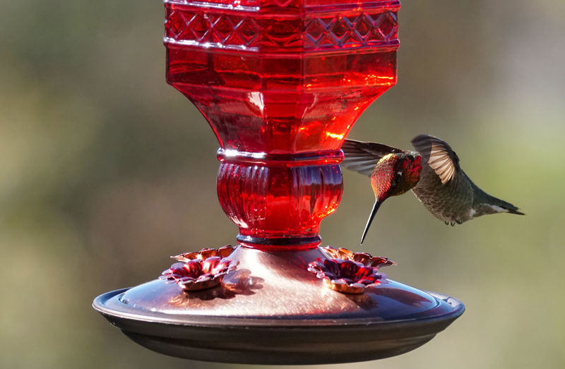 Close-up of bird in glass