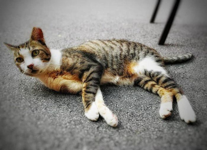 #cats #animals