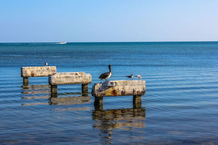 Birds perching on retaining walls in sea against clear sky during sunny day