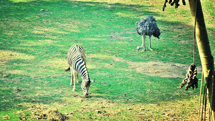 Passeio Célula Passeio Zoo