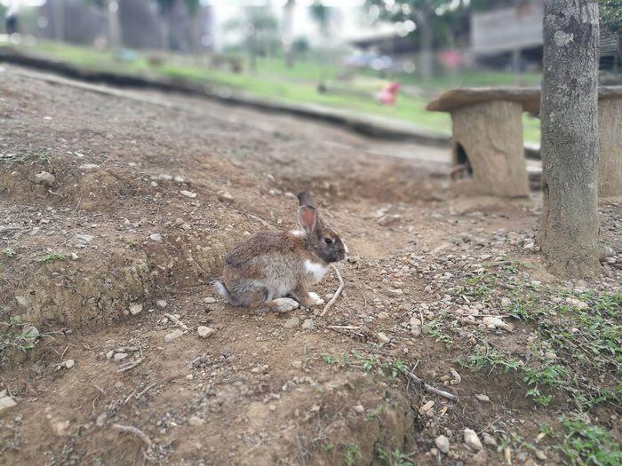 Brown Brown Rabbit Pets Rodent Animal Themes Close-up Rabbit - Animal Rabbit Exotic Pets Easter Bunny Animal Ear