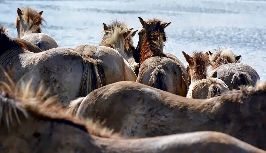 Animals In The Wild Horse Photography  Nature Photography Konikhorses Wildlife & Nature EyeEm Nature Lover Wildlife Photography Fresh On Market 2016