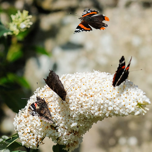 Summertime Sunshine ☀ Beauty In Nature Butterflies Close-up Flower Focus On Foreground Plant