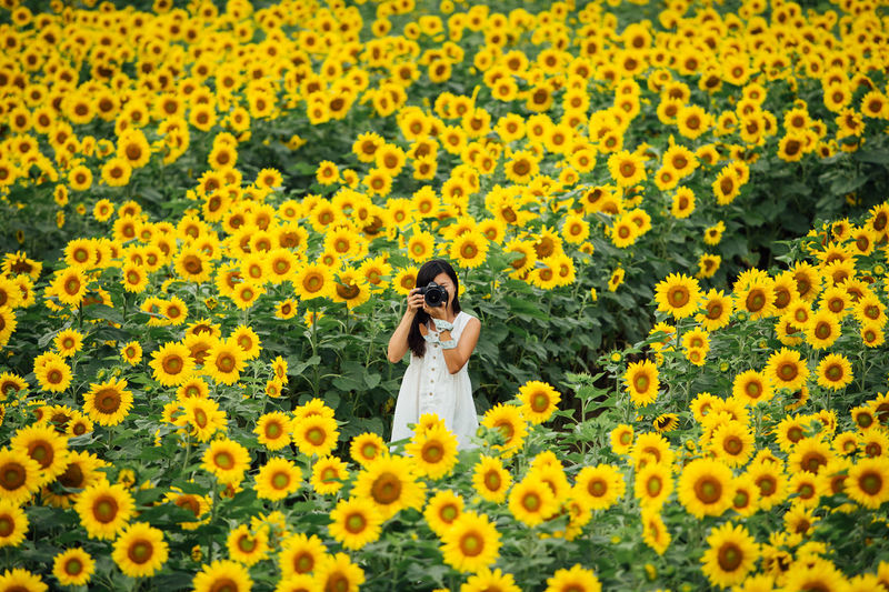 Lost in the Massive Sunflower Maze Agriculture Asian Girl Blooming Camera EyeEmNewHere Flower Freshness Girl Growth Hokkaido Japan Massive Nature One Person Pattern Petal Photography Plant Spring Spring Flower Springtime Sunflower Sunflower Field Travel Yellow The Great Outdoors - 2017 EyeEm Awards Live For The Story Done That. Summer Exploratorium It's About The Journey International Women's Day 2019