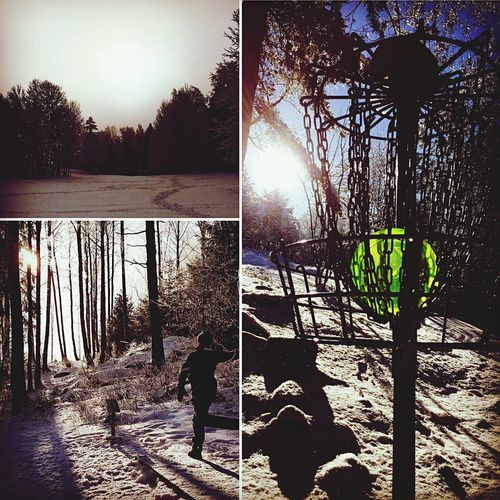 Sunlight Outdoors Tree Winter Wonderland Discgolf Discgolfbasket First Eyeem Photo