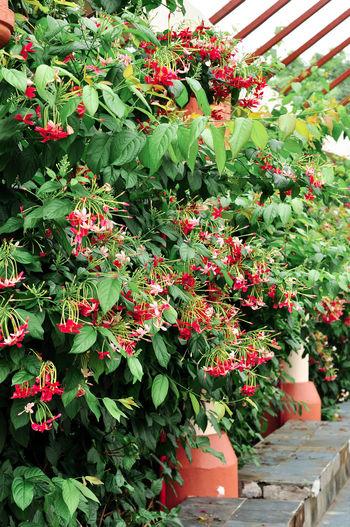 Red flowers blooming on tree