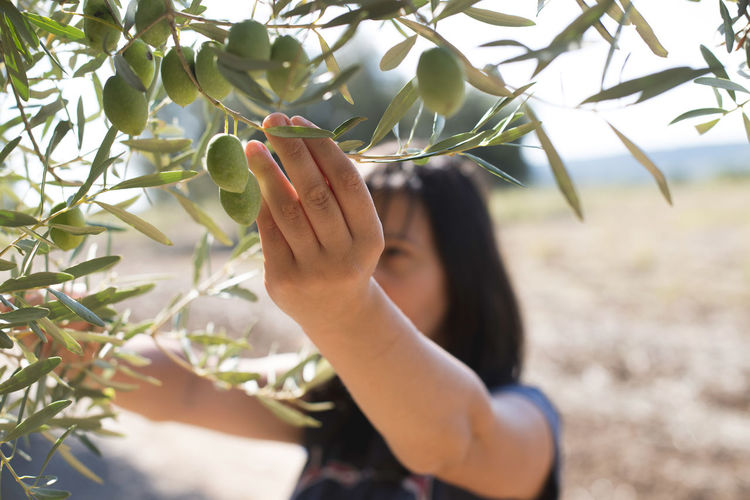 Woman picking fruits from tree