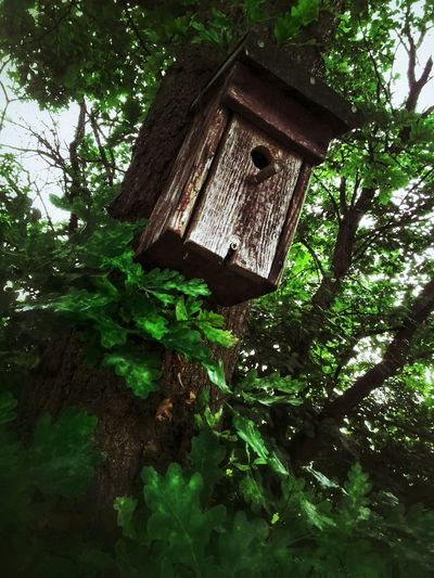 Oak Tree Oak Bird House Green Grange Nature_collection The Moment - 2015 EyeEm Awards The Adventure Handbook Amazing Architecture AsusZenfone5Photography